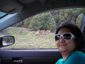 We saw lots of mule deer. Had I my crossbow...